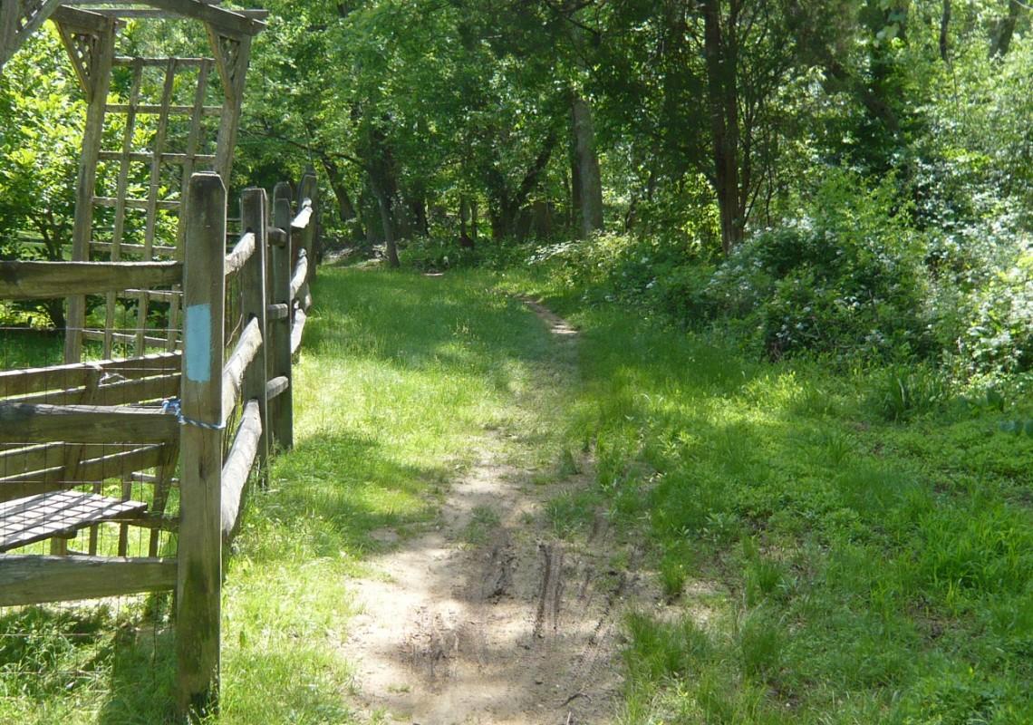 Greenway Trail near Darnestown Rd.