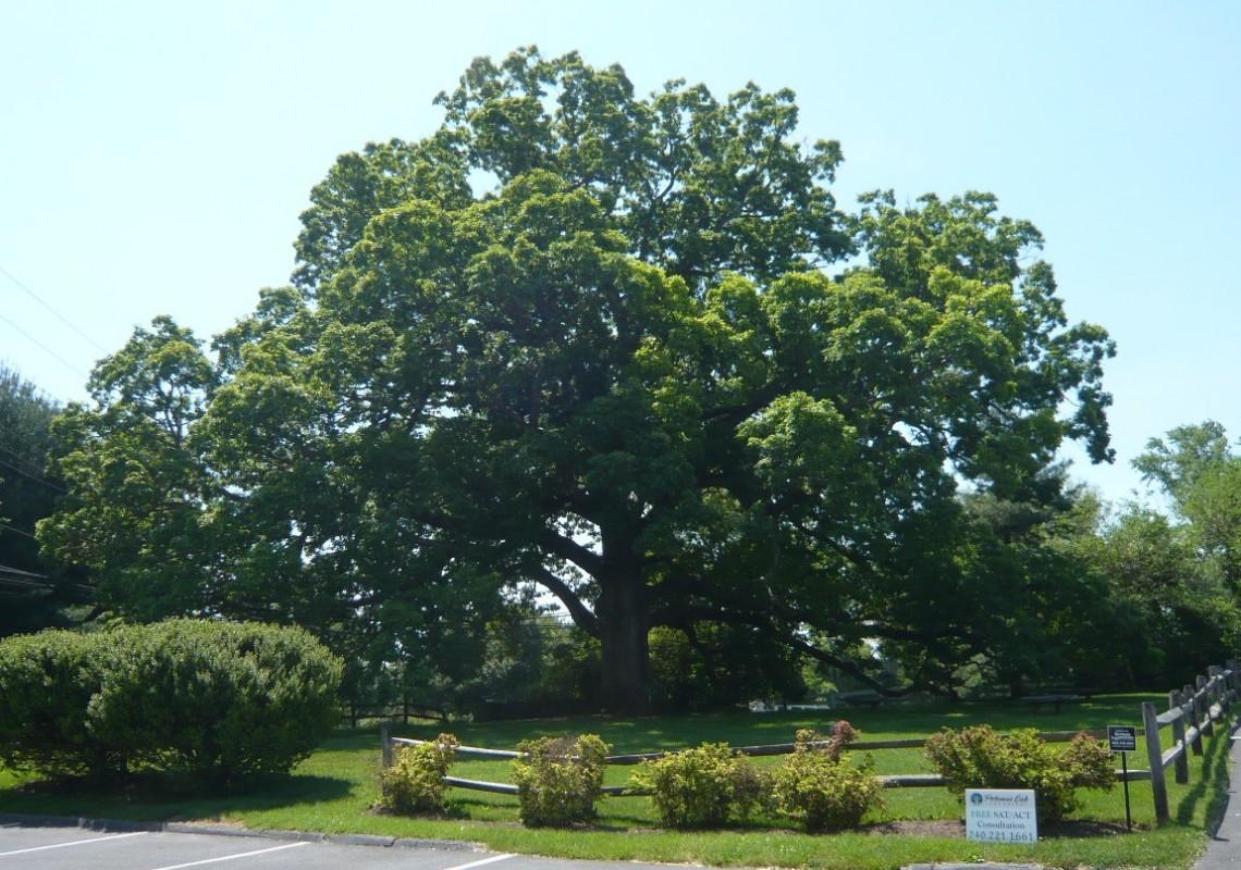 Potomac Oak Center